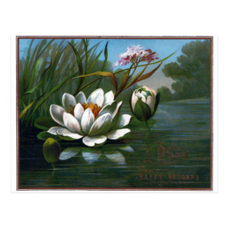 Water Lily and Old Fashioned Greeting Postcard