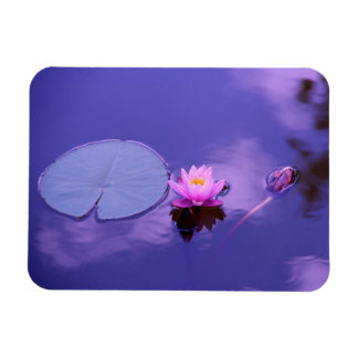 Water Lily at Dawn Magnet