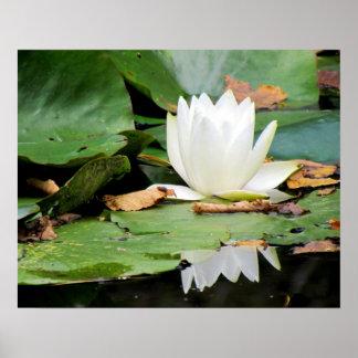 Water Lily, Azalea Garden  - Maine Poster