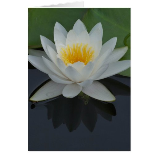 Water Lily Blank 5x7 Greeting Card