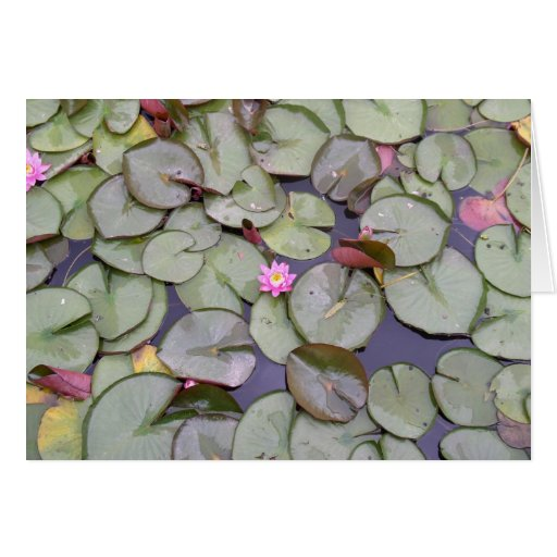 Water Lily Blank Card