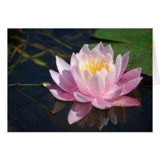 Water Lily Blank Greeting Card