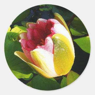 Water Lily Bloom Round Sticker