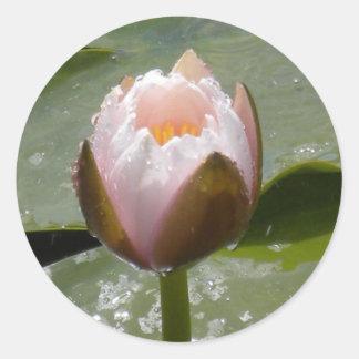 Water Lily Bud Round Sticker