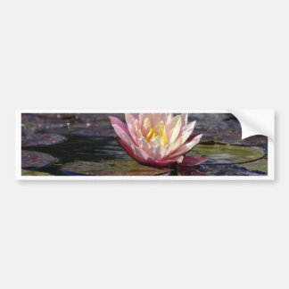 Water Lily Bumper Sticker