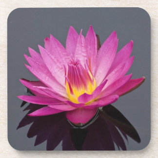 Water LIly Cork coaster