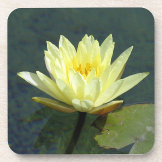 Water lily drink coaster