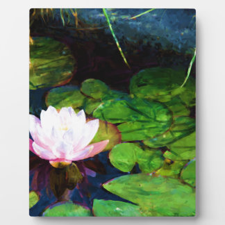 Water lily floating in a pond plaque