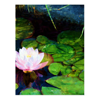Water lily floating in a pond postcard