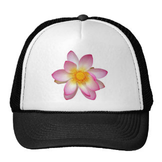 water lily flower cap