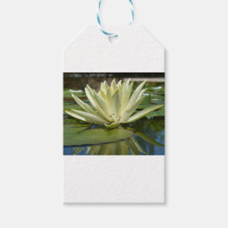 Water lily gift tags