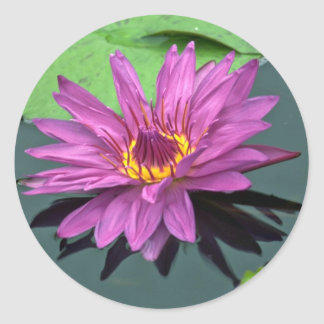 Water lily in full bloom stickers