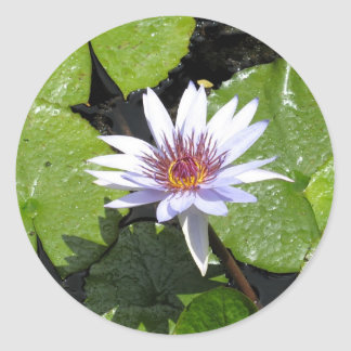 Water Lily in Pond! Round Stickers