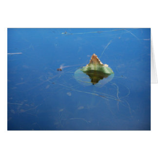 Water Lily Leaf  In Water Greeting Card