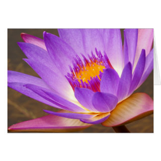 Water Lily Note Card - Blank Inside