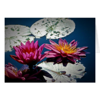 Water lily NoteCard (Blank) Note Card
