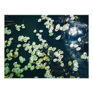 Water Lily Pads In A Blue River, Botanical Photo