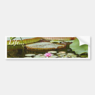 Water Lily Pads Ponds Bumper Sticker