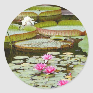 Water Lily Pads Ponds Round Stickers