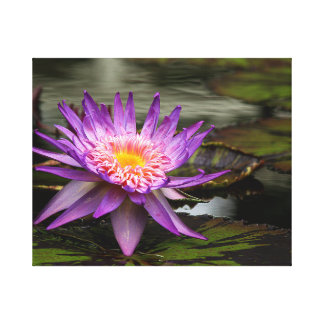 Water Lily Photo Canvas Print