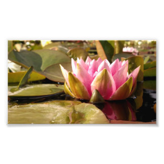 Water Lily Photo Print