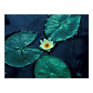 Water Lily Postcards