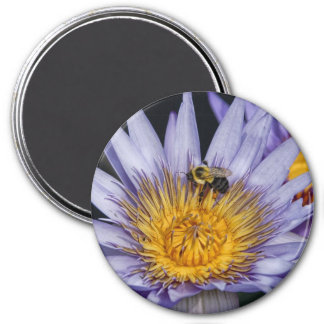 Water Lily Purple & Bee Magnet