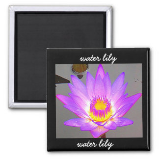 Water Lily Purple - Border Square Magnet