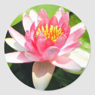 Water Lily Round Sticker