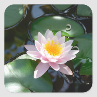 water lily square Sticker