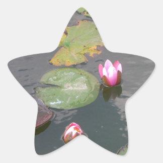 Water Lily Star Sticker