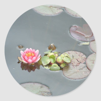 Water Lily Sticker