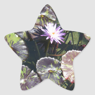 Water Lily Star Stickers