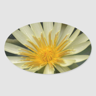 Water Lily Oval Stickers