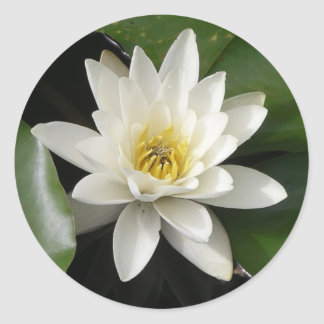 Water Lily Sticker