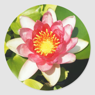 Water Lily Stickers