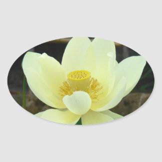water lily oval sticker