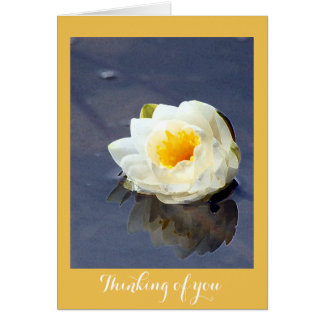 Water lily thinking of you card