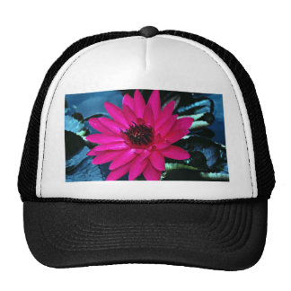 Water lily, tropical night hats