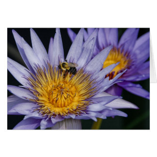 Water Lily with bumble bee Card