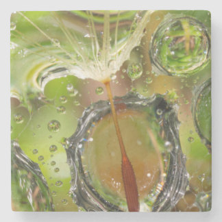 Water on dandelion seed, CA Stone Coaster