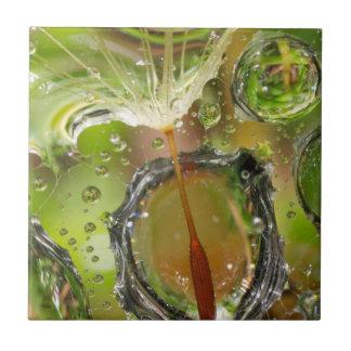 Water on dandelion seed, CA Tile