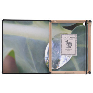 Water on Fresh Plant Leaf iPad Cases