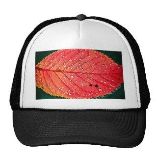 Water on Leaf Trucker Hat
