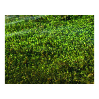 Water plants underwater in pond personalized flyer