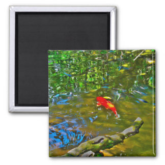 Water Reflections and the Koi Fish Magnets