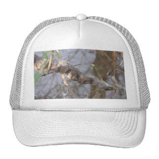Water Snake Hat