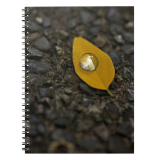 Water Turns Pearly Notebook