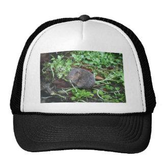 Water Vole Hat