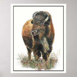 Watercolor Bison Buffalo Animal Nature art Poster